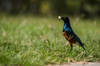 shallow focus photo of blue and brown bird