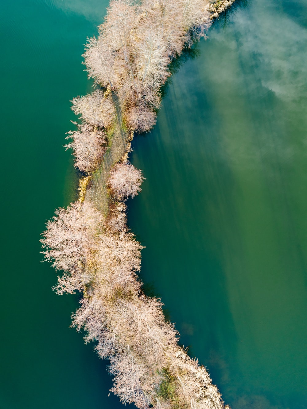 aerial photography of road surrounded by trees and body of water