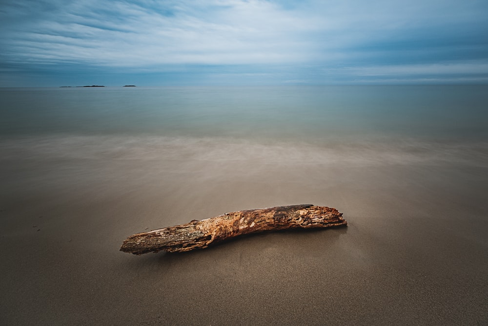 brown driftwood on soil ground