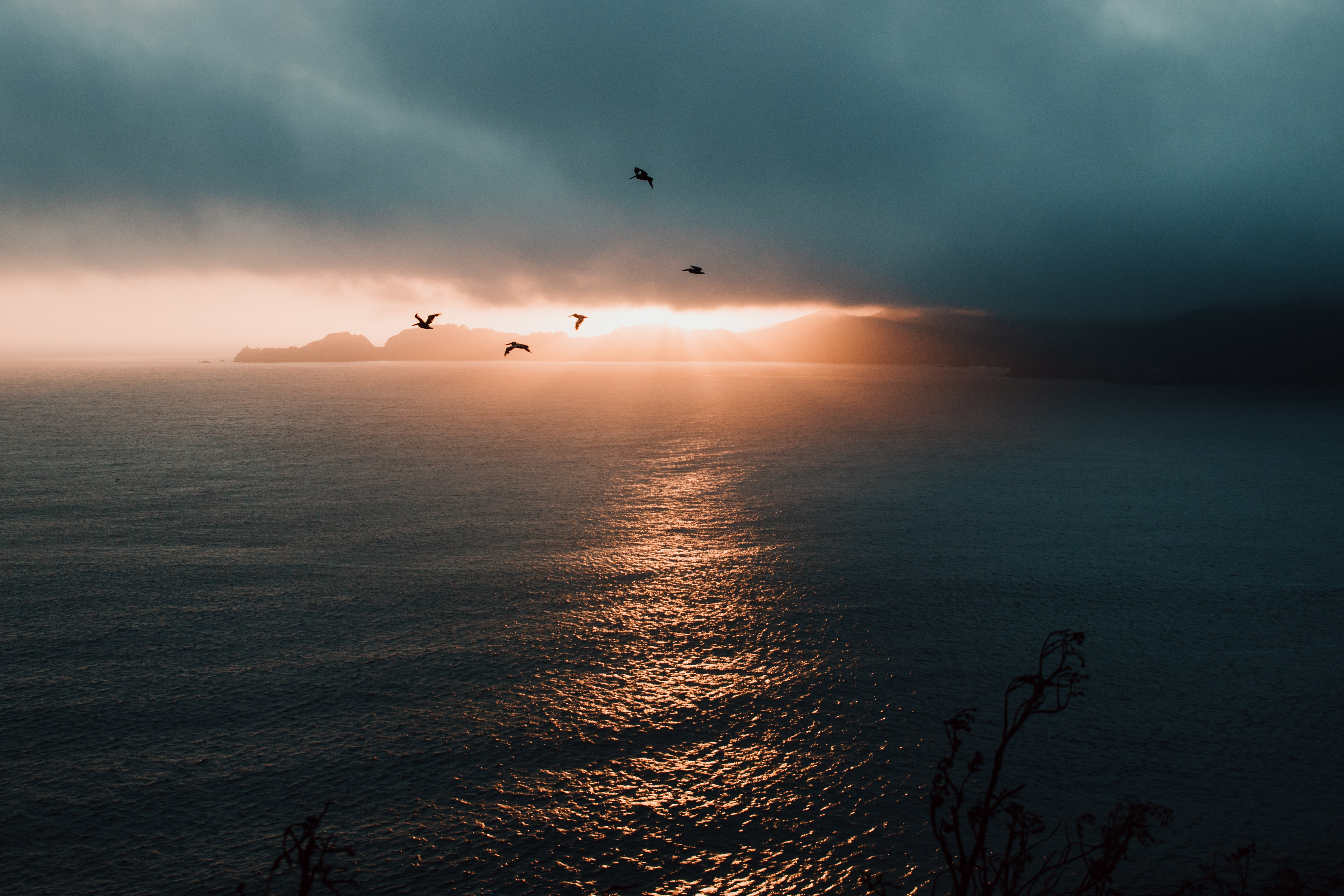 photo of flying birds over body of water