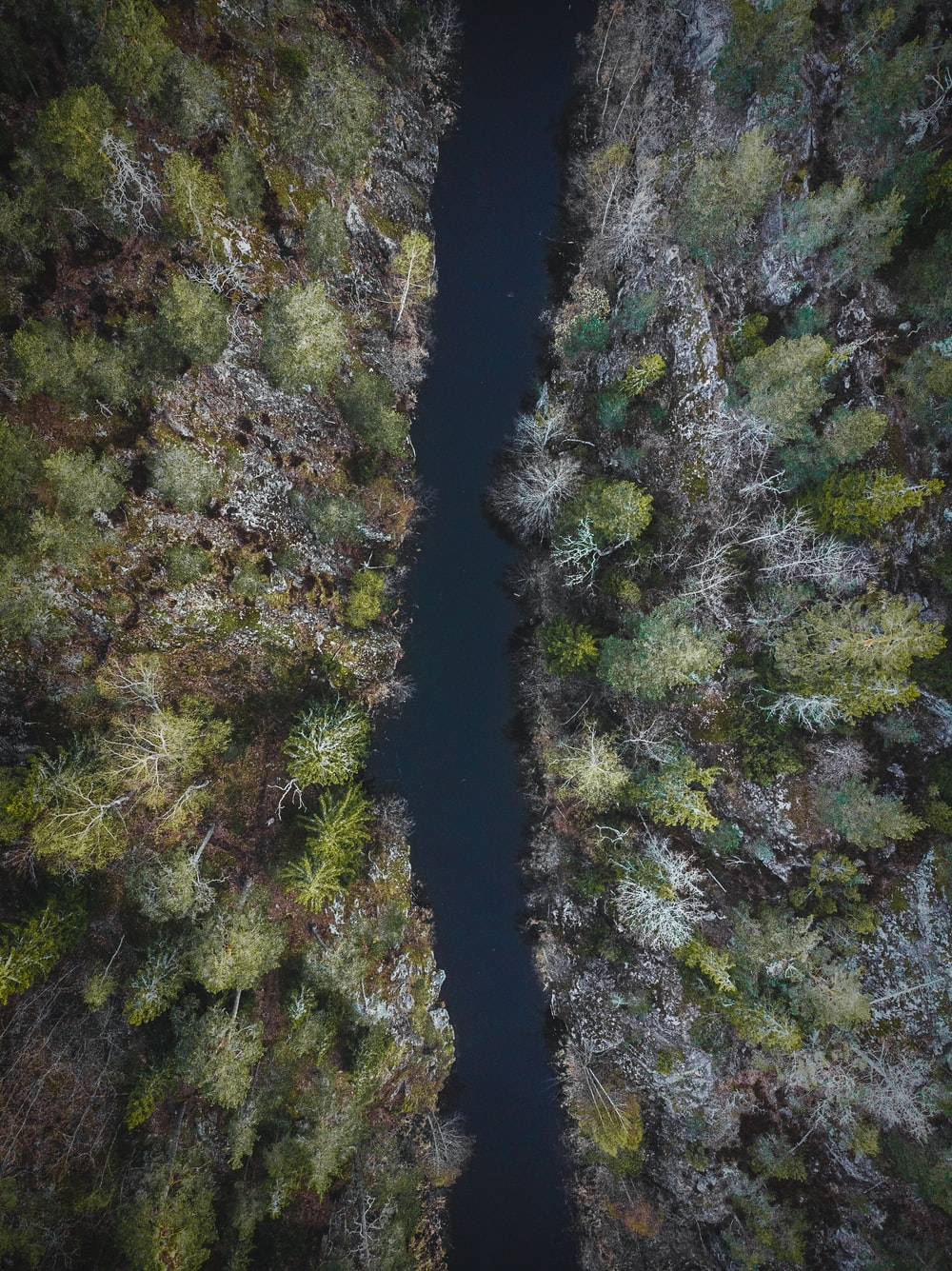 bird's eye view of river and forest