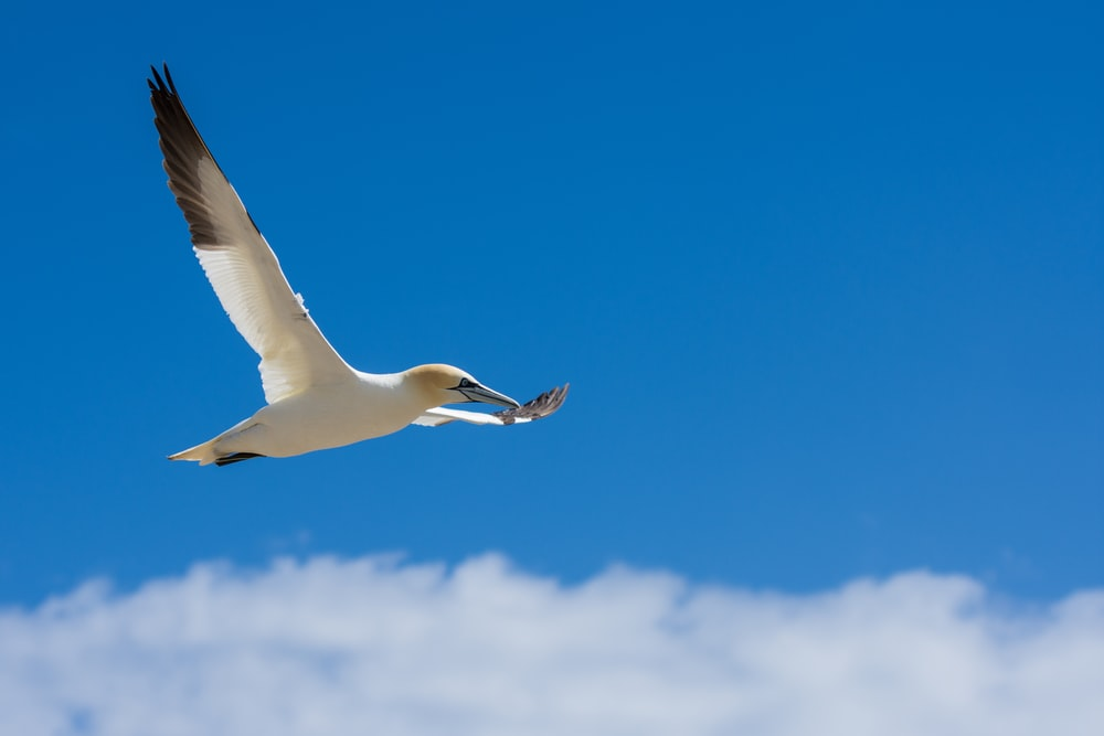 white and black bird flying in the sky during day time