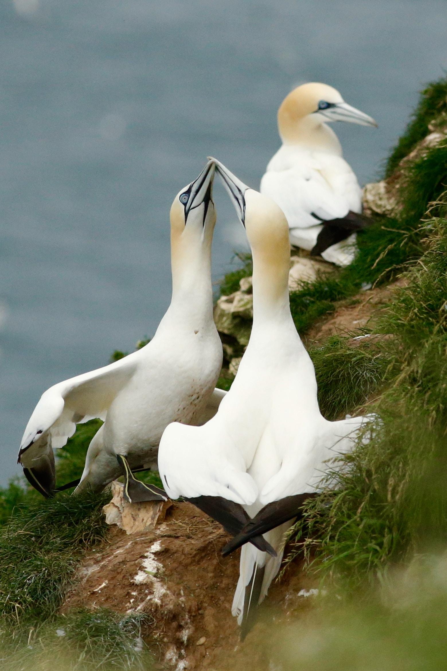 three white birds on grass