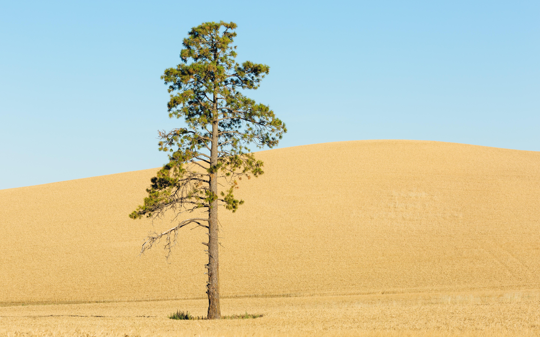 photo of tree on sand dune