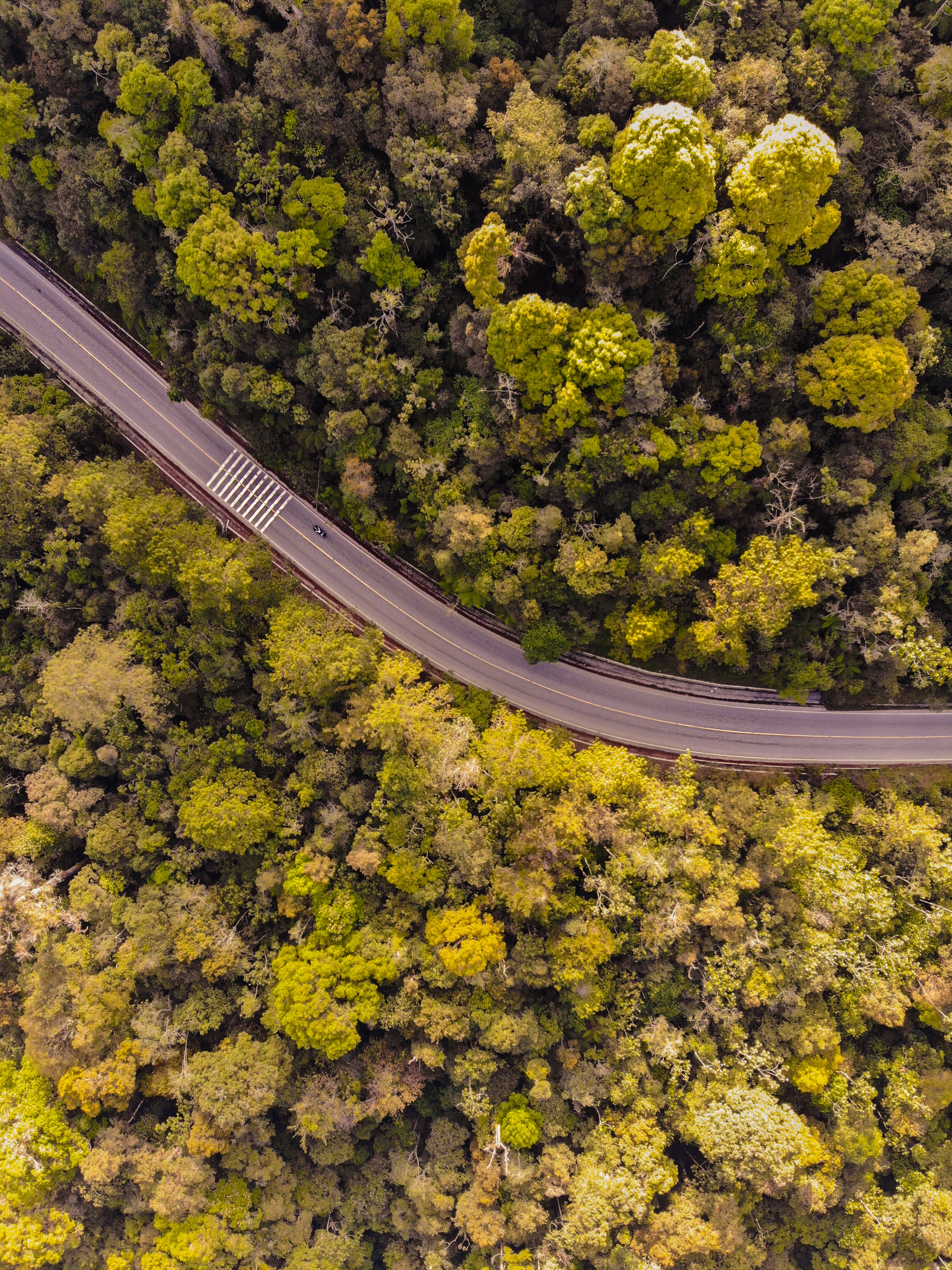 aerial view of road between tall trees