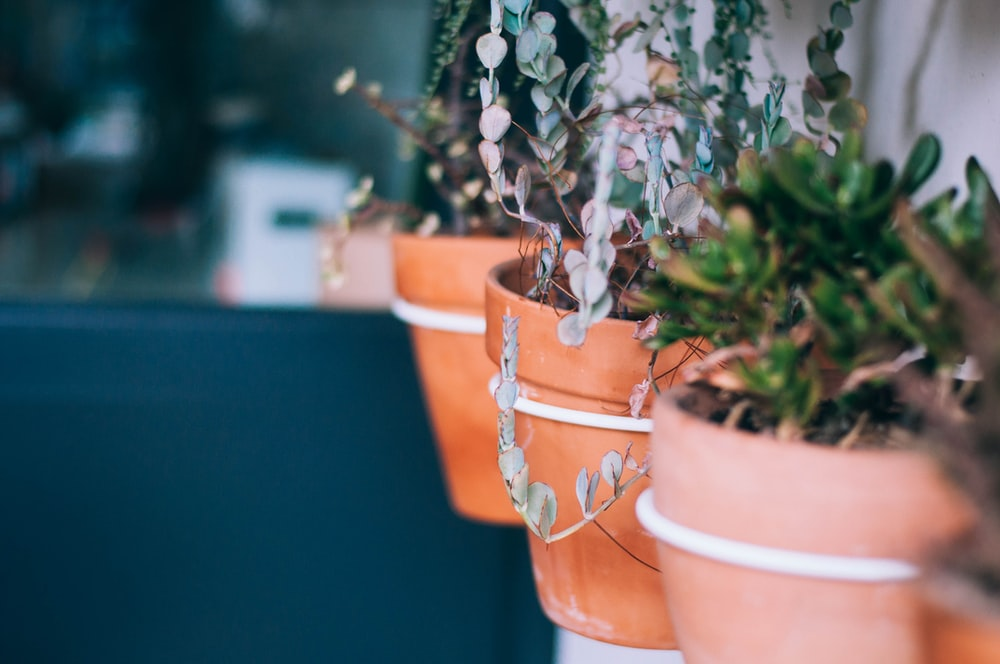 selective focus photograph of plant on brown planter