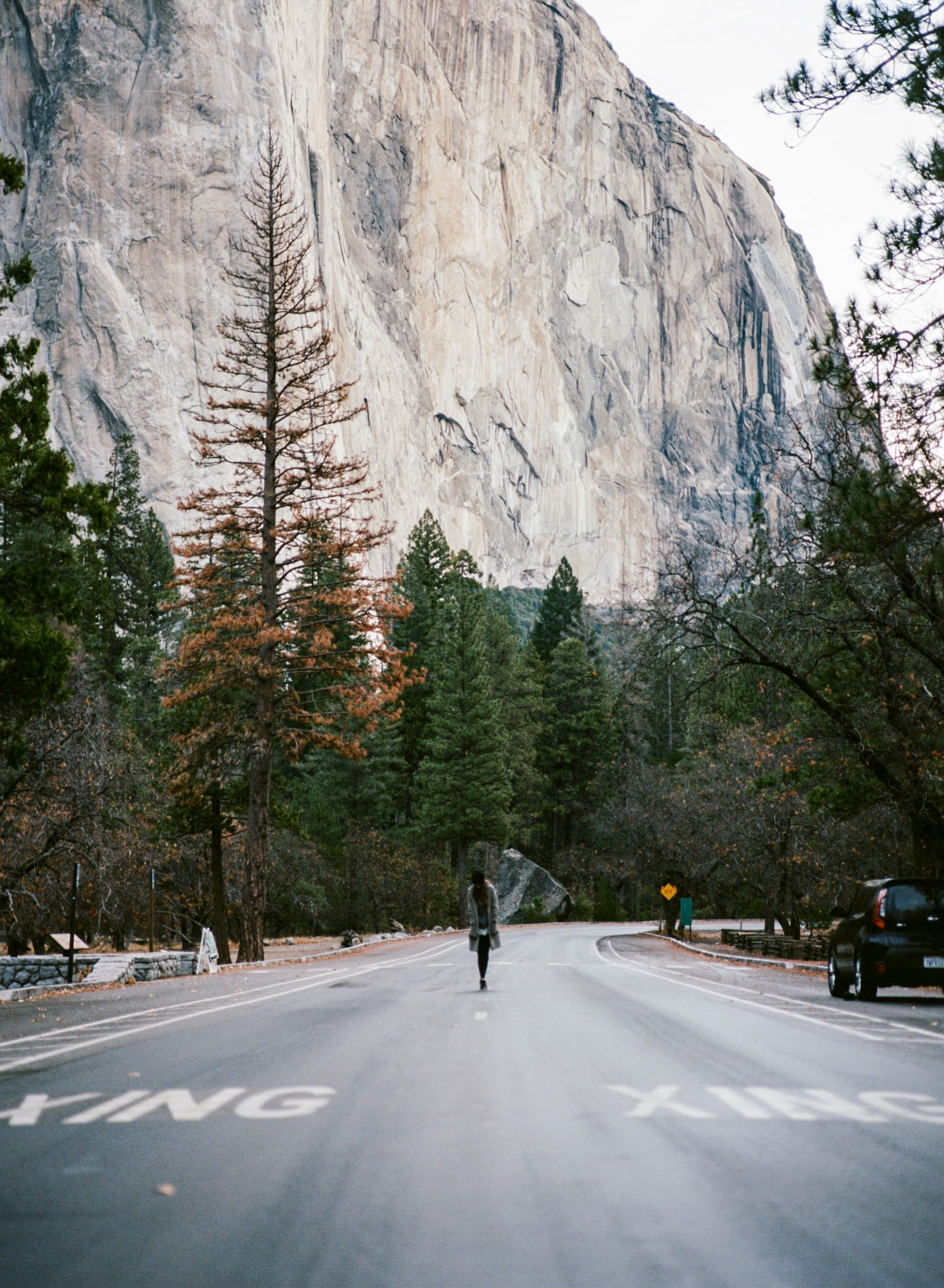 person walking on road between trees and mountain in distance