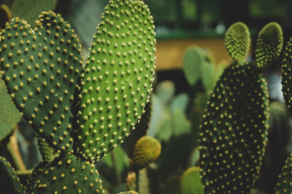 green cactus plant closeup photography