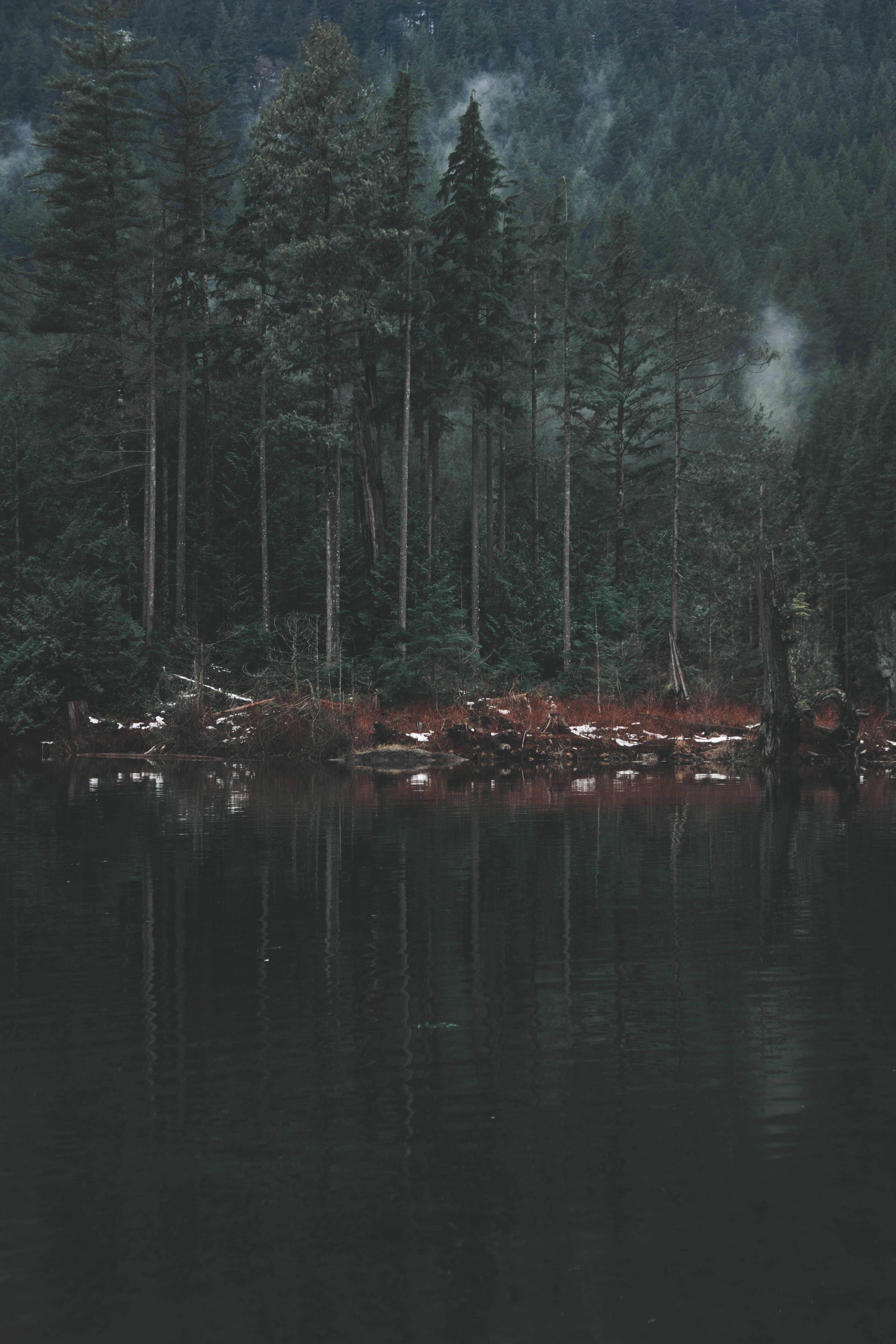 forest and lake during daytime in landscape photography