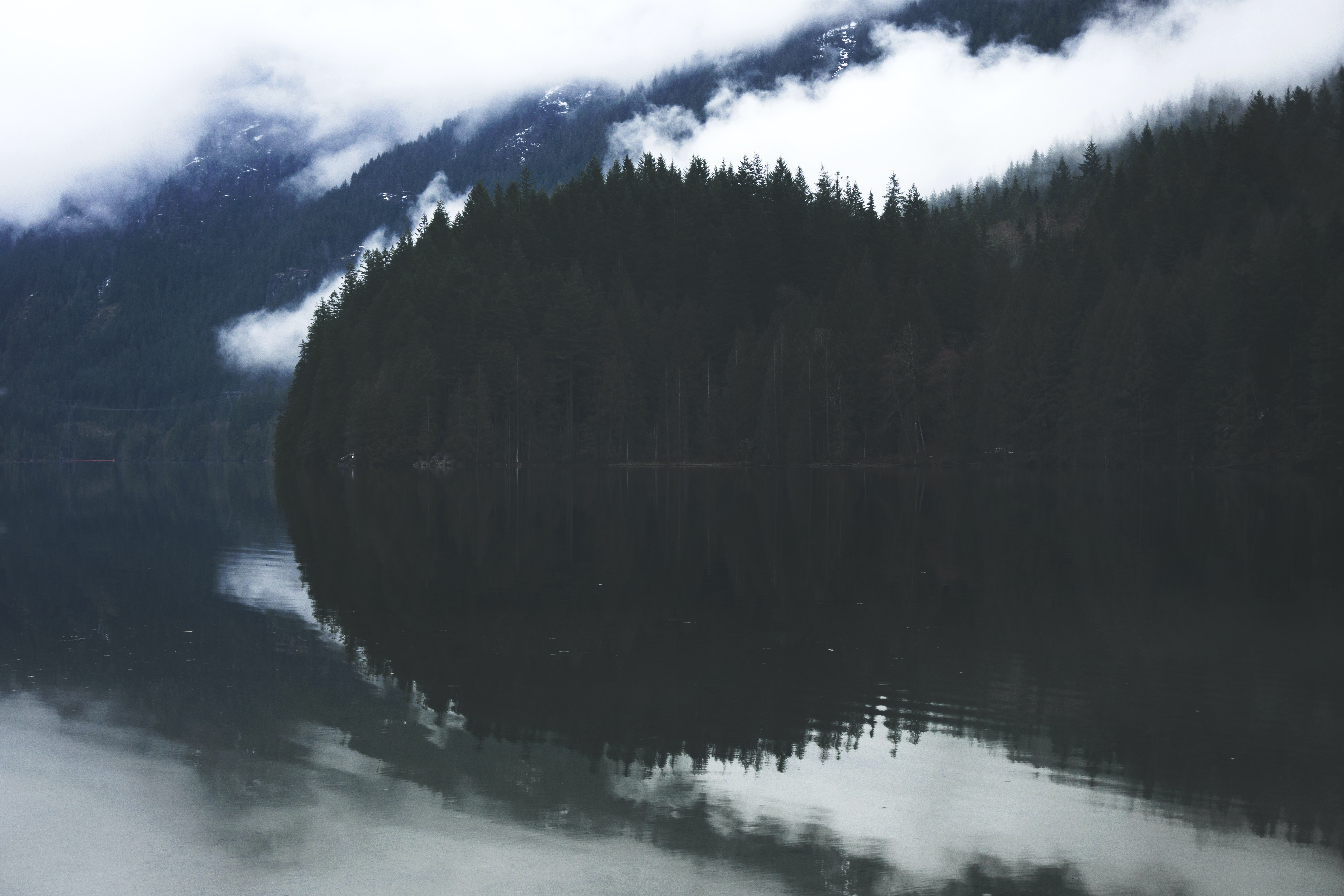 forest mirrored on body of water