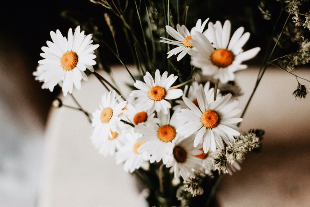 selective focus photography of white daises in vase