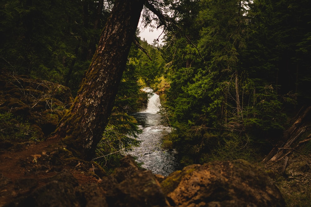 landscape photography of river in forest