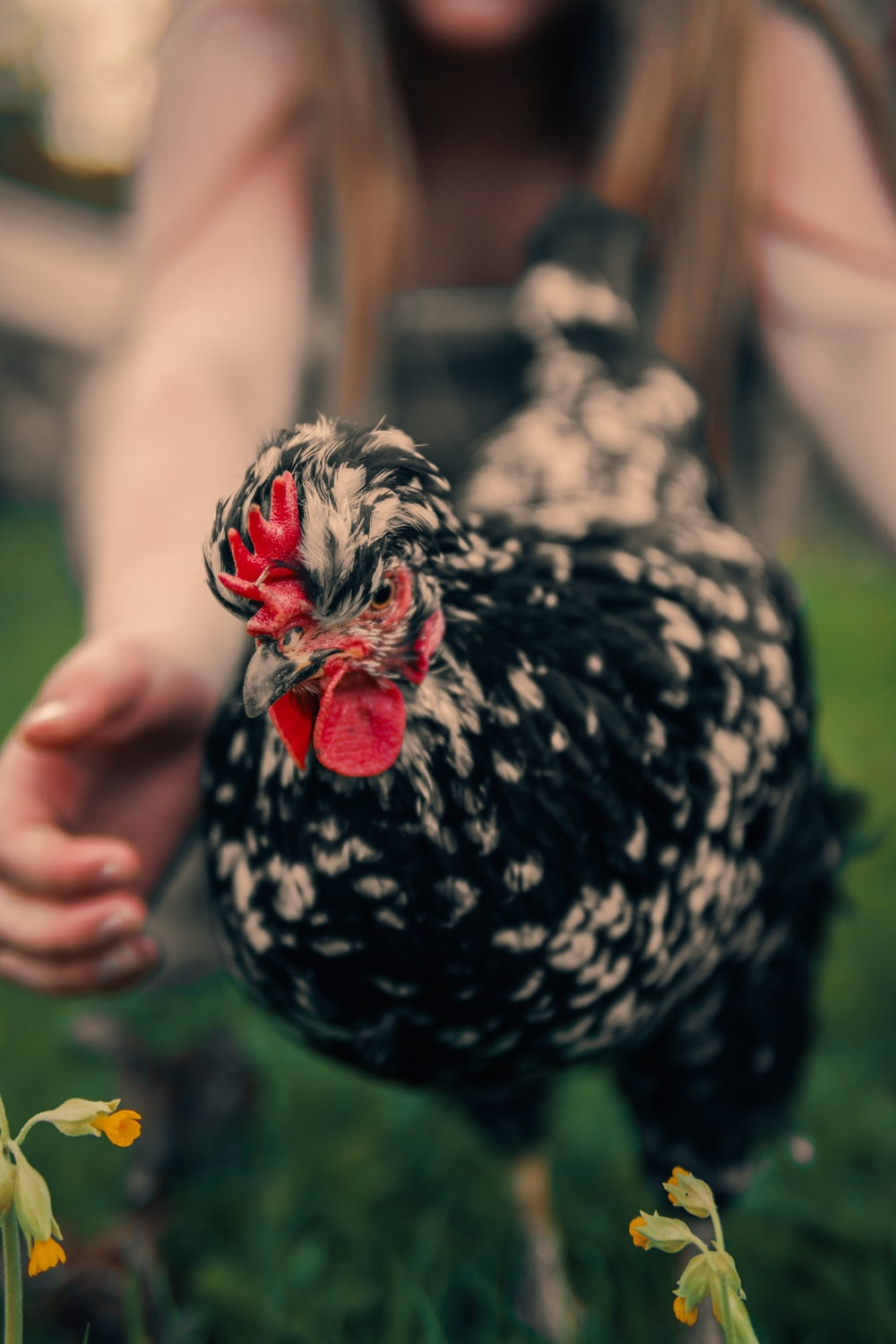 selective focus photography of running chicken