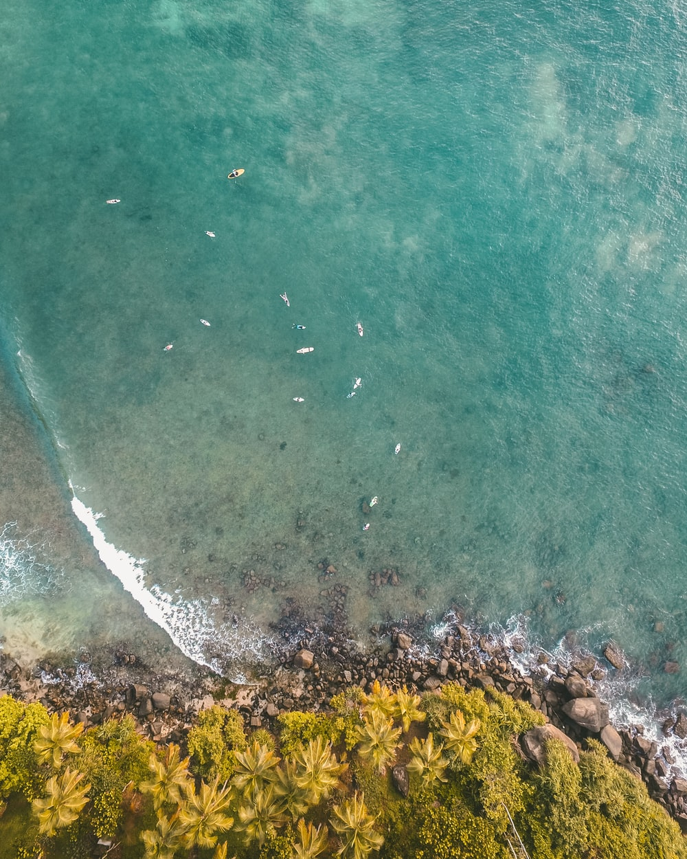 birds-eye view on ocean and forest