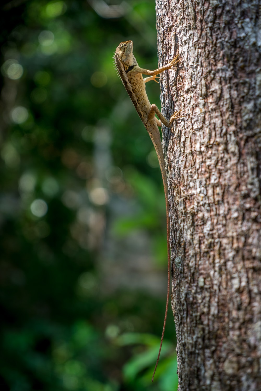selective focus photography of iguana climbing on tree trunk