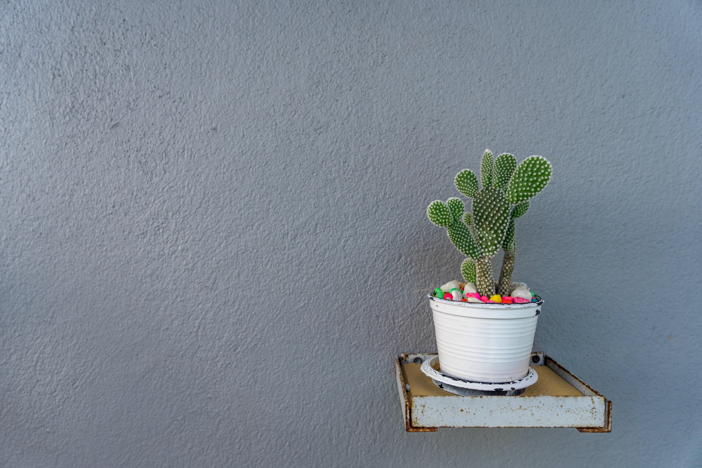 green cactus on white plastic plant pot