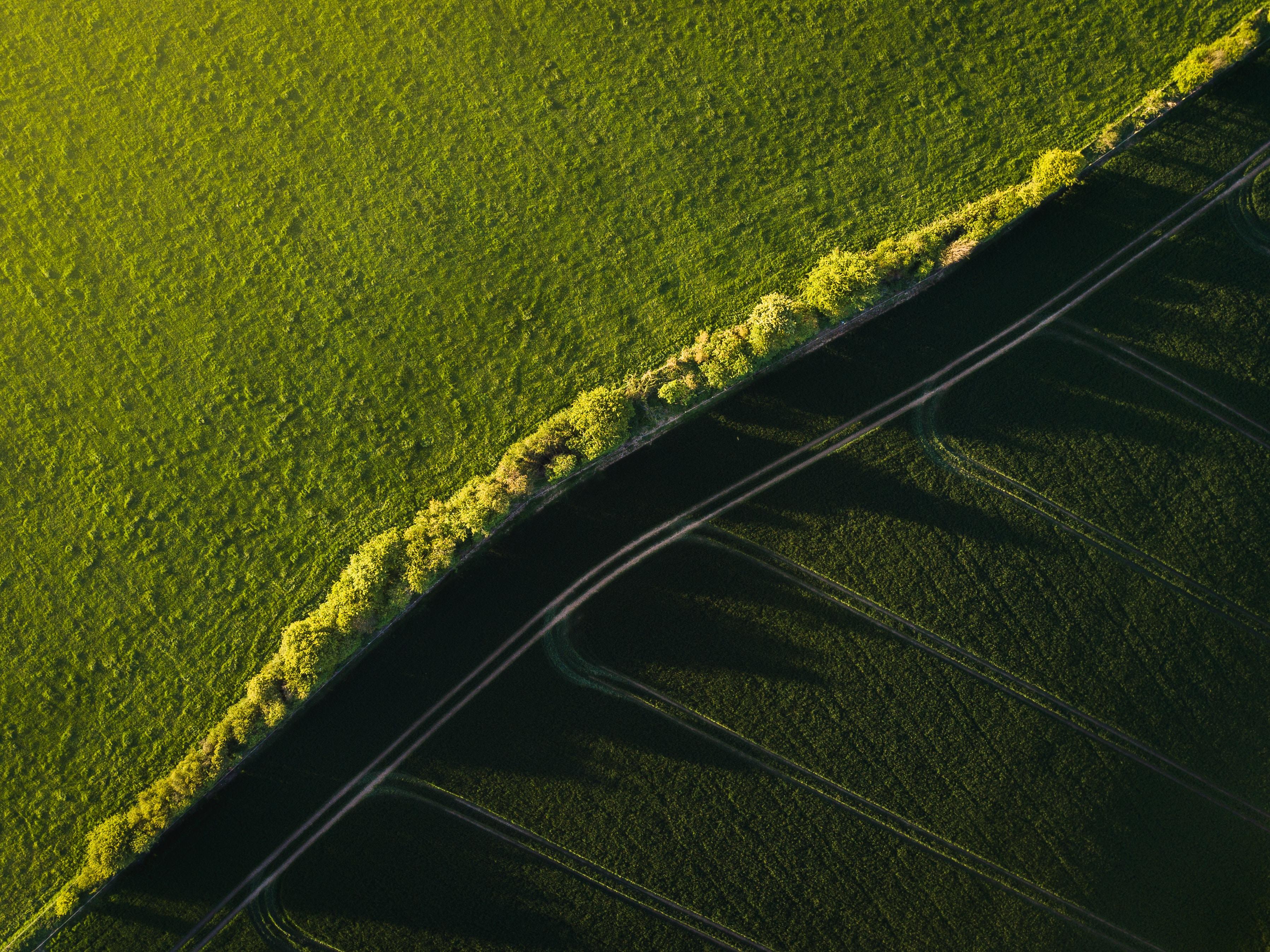 bird's eye view photo of green grass field