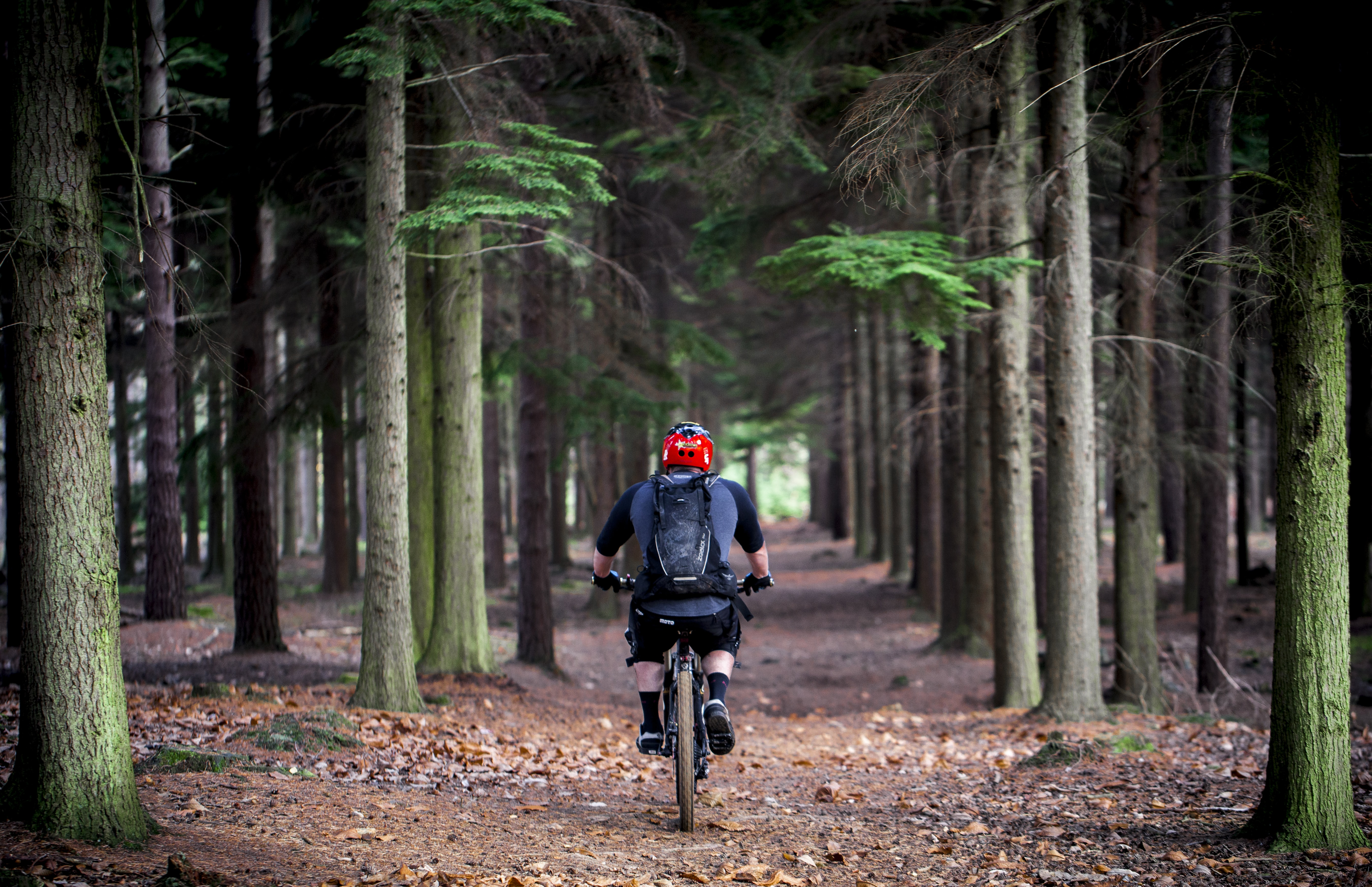 person cycling on bike surrounds with trees at daytime