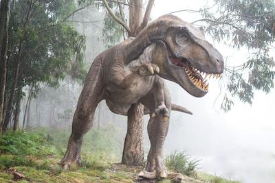 rex-dinozaur
