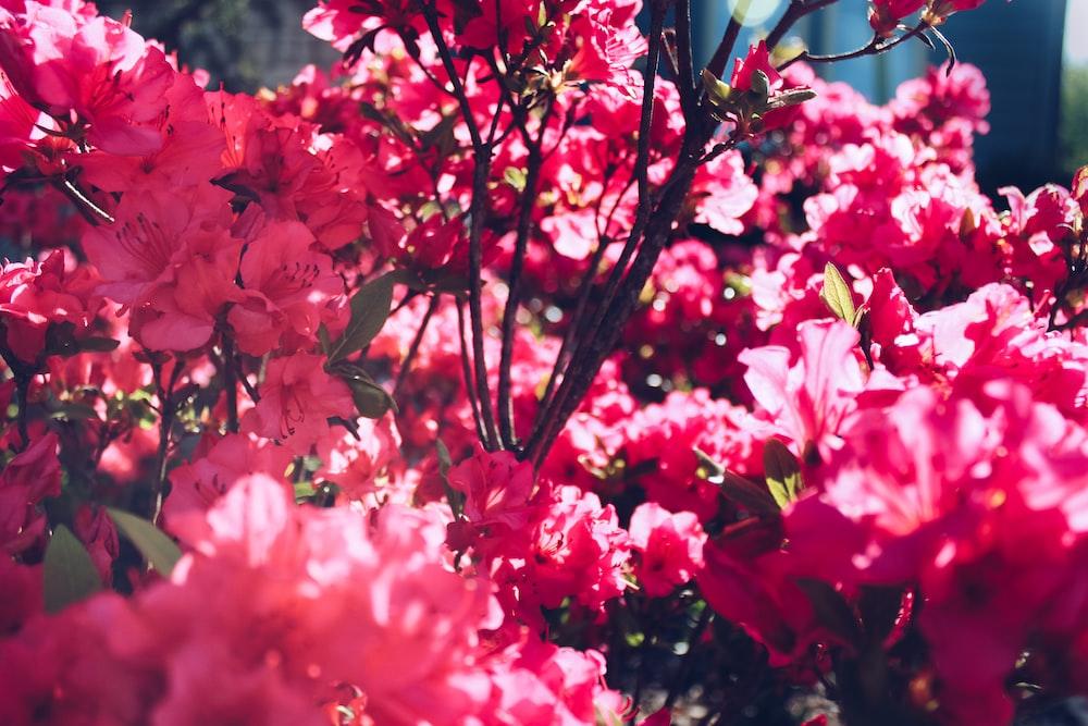 Doğa Yadigarı 7 Çiçek