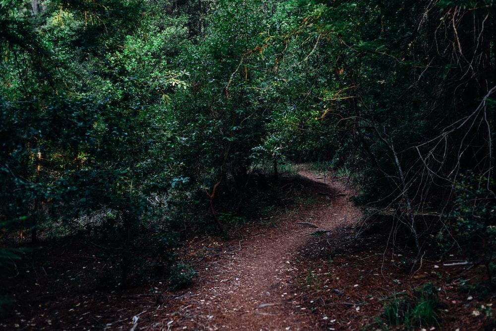 photograph of dirt pathway between plants
