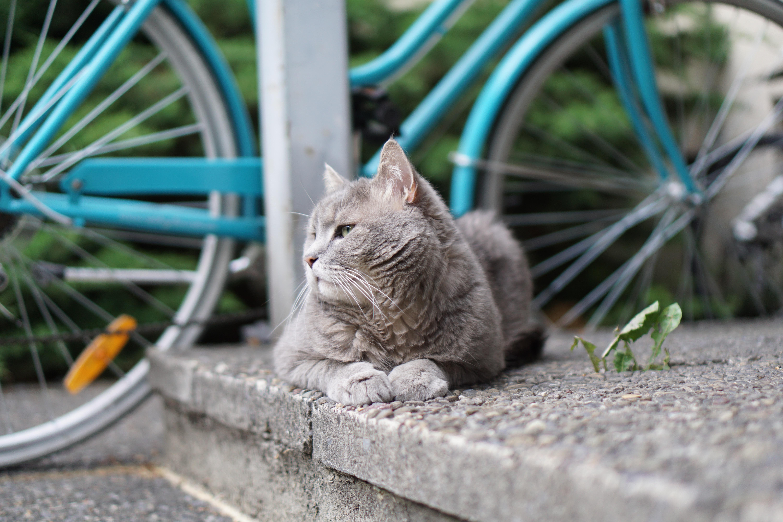 gray cat on concrete floor