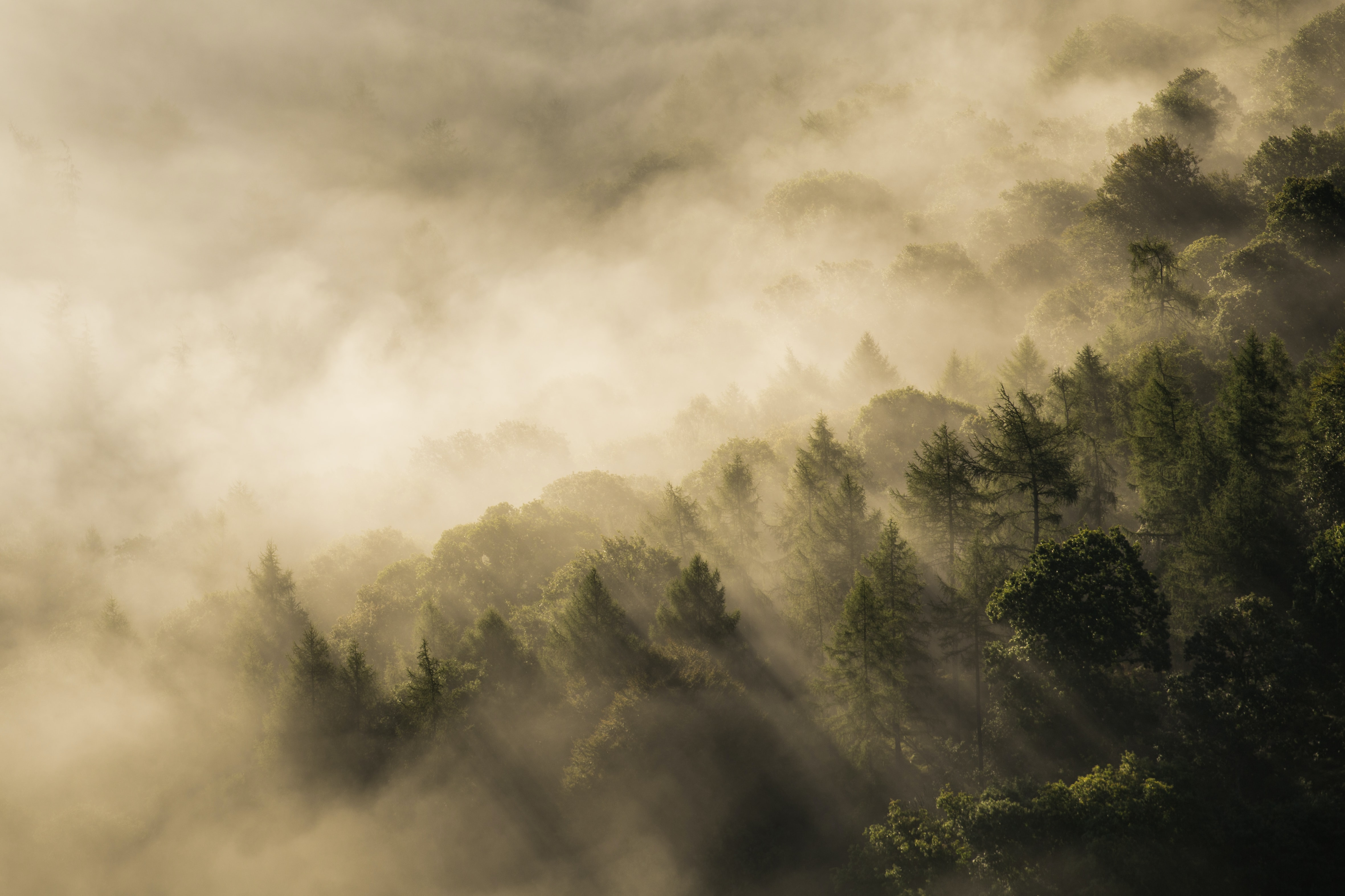 green forest covered by fog