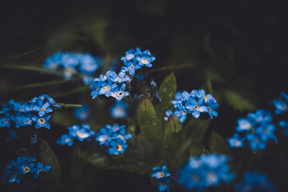 close up photography of blue clustered flower during daytime