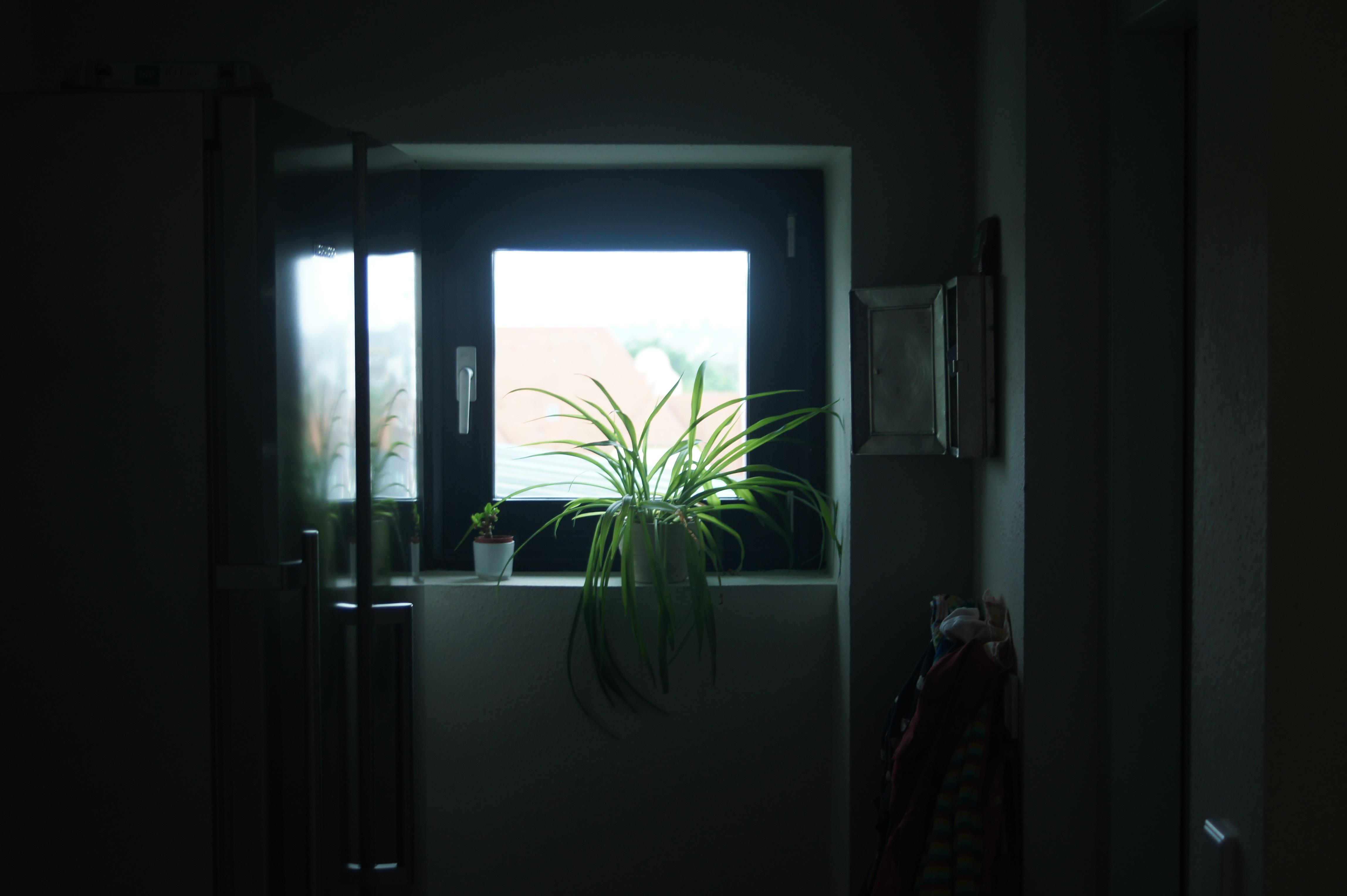 green linear leafed plant near window