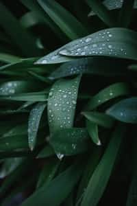 R a i n y                               G r e e t i ng s rain stories