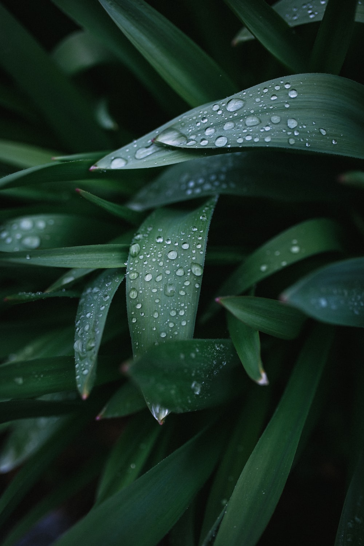 water dew on grass