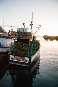 white and black Imapala Cape Town fishing boat on body of water during sunrise