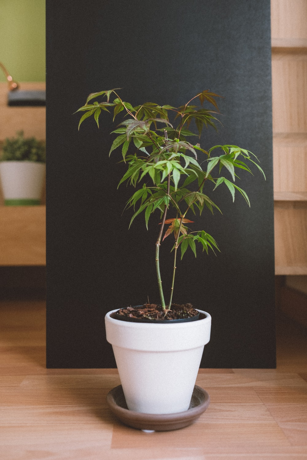 photo of cannabis plant with pot