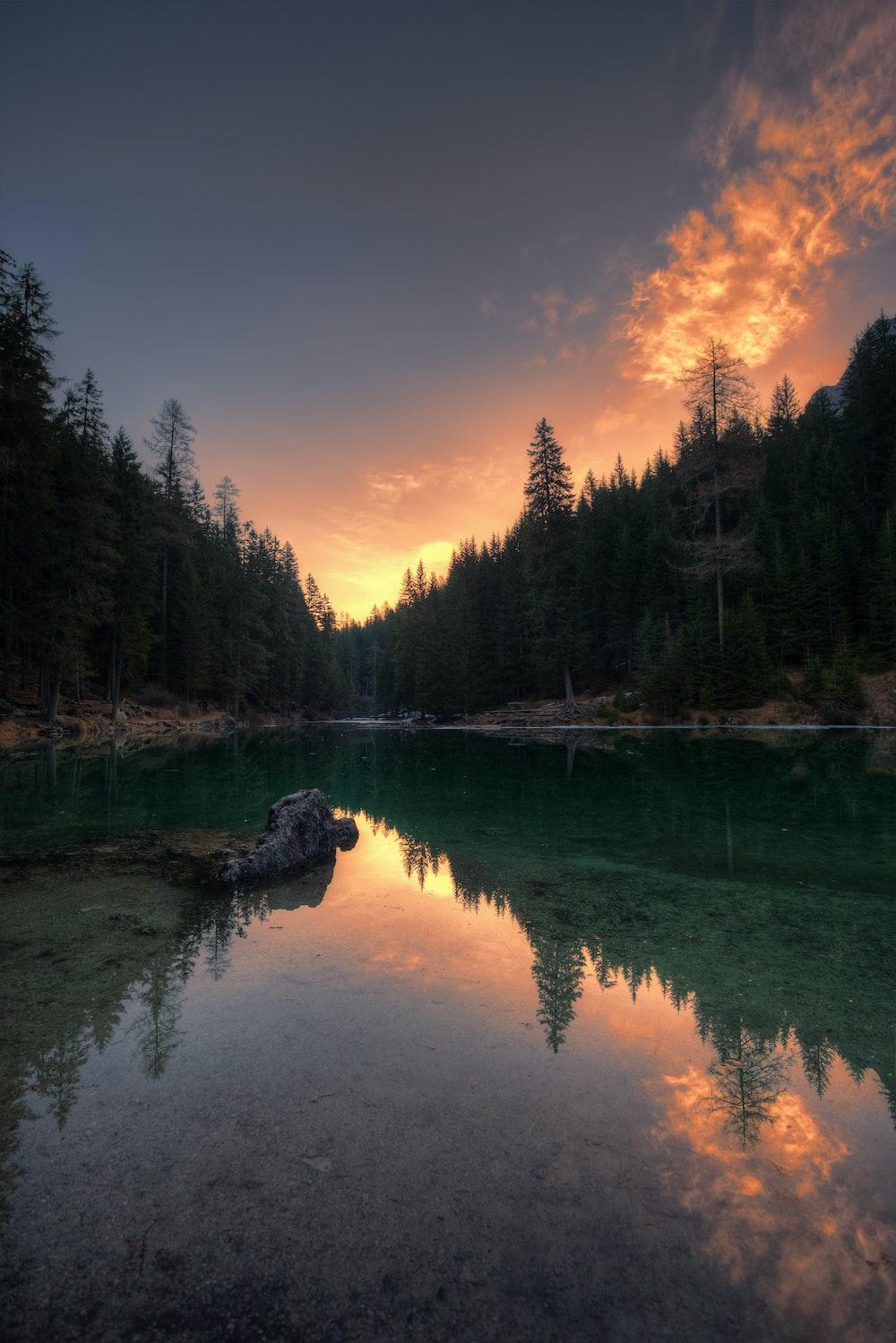 body of water in between trees