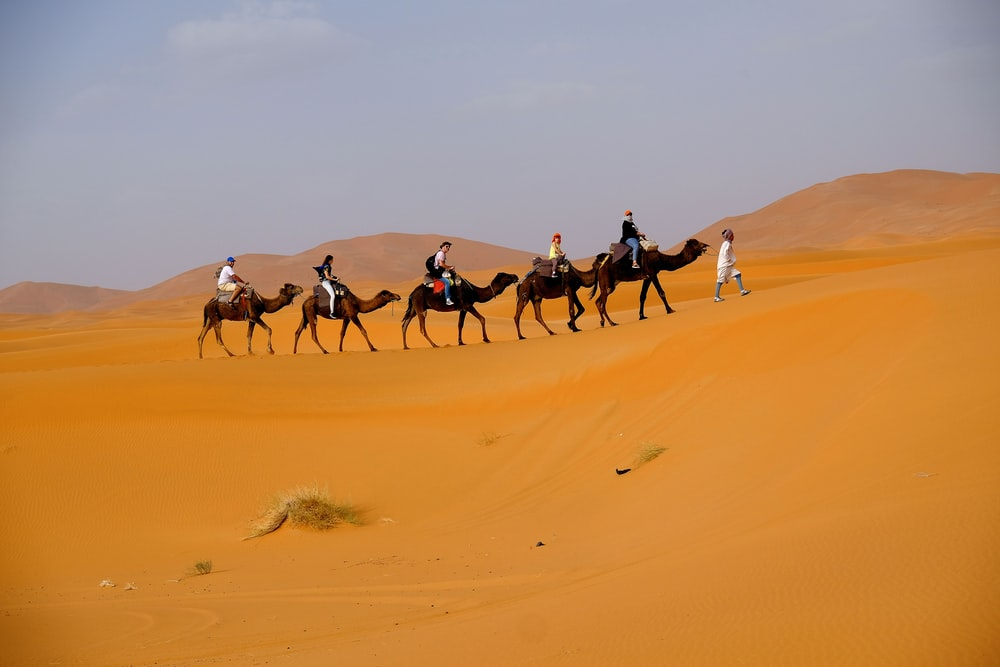 landscape photo of people riding camel
