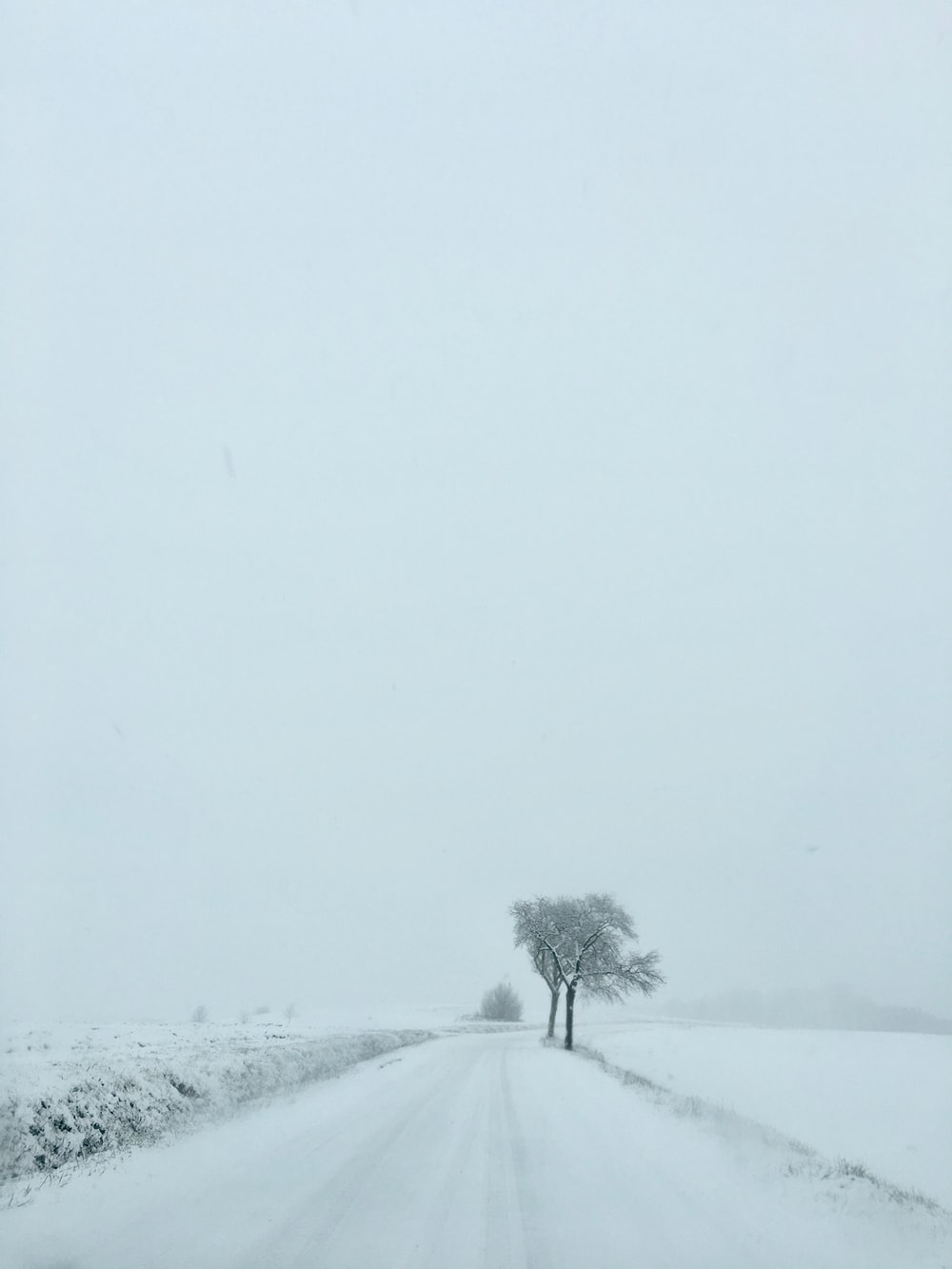 snow-covered road and tree on a cloudy day
