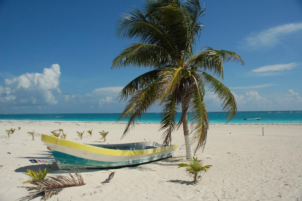 photo of boat near seashore and coconut tree
