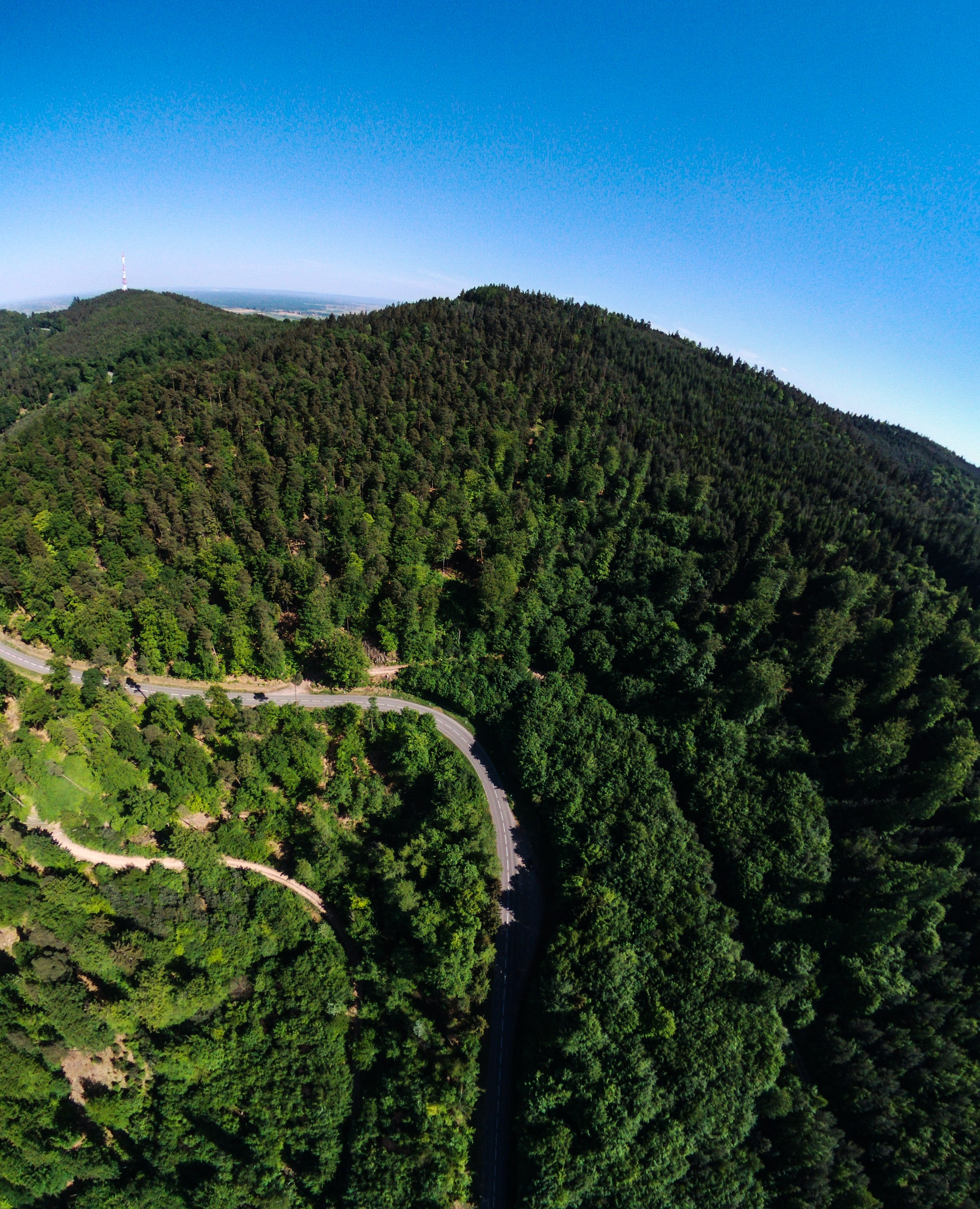 aerial view photography of green forest trees during daytime
