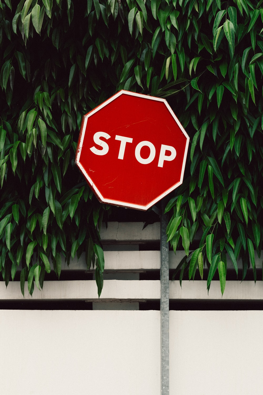 red and white Stop road sign near green tree