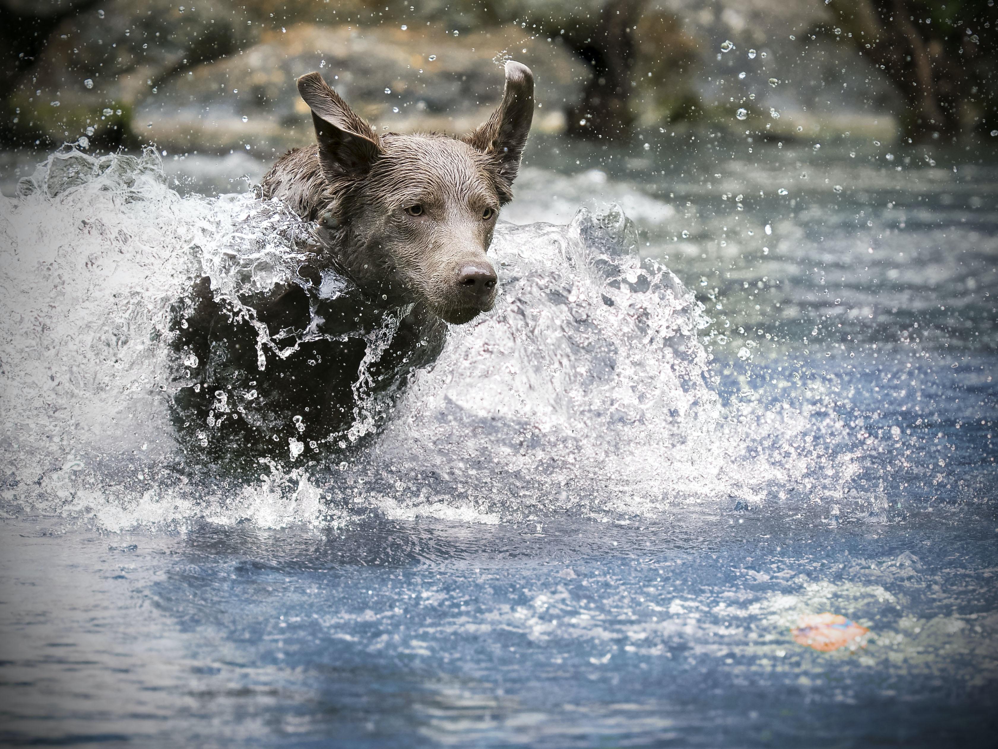 dogs walking through water during daytime