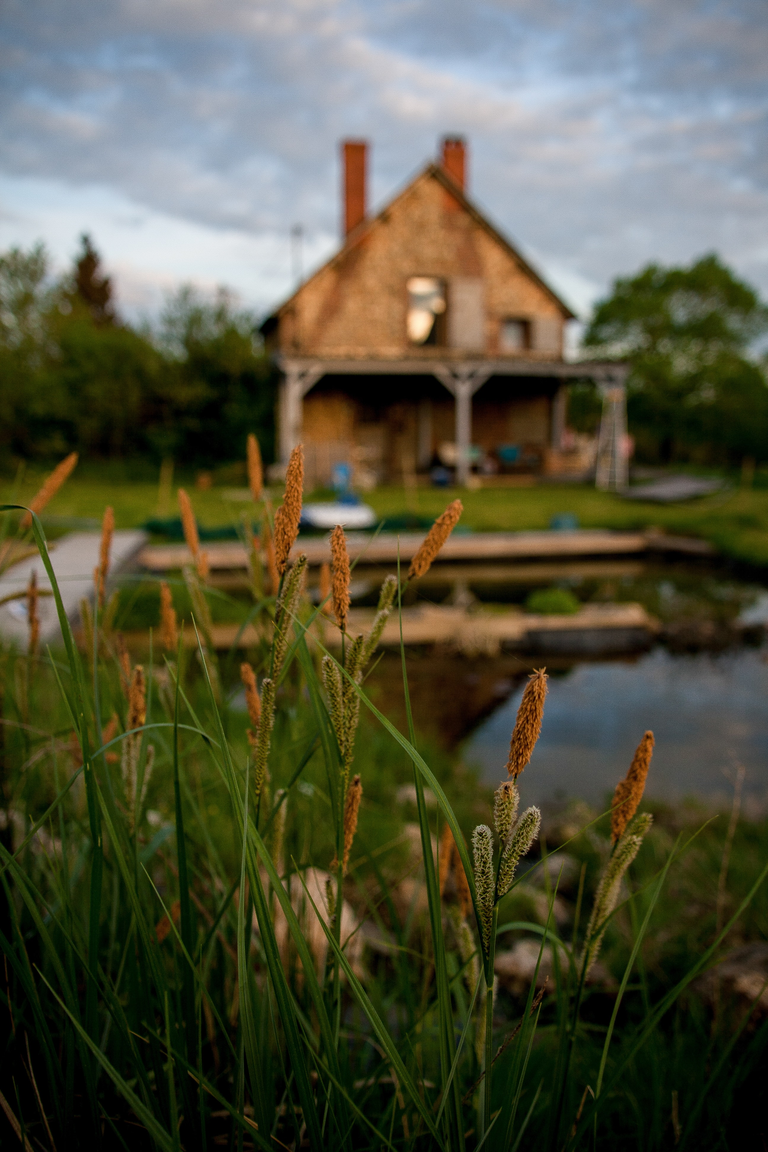 selective focus photography of yellow flowers near body of water on brown wooden house at daytime