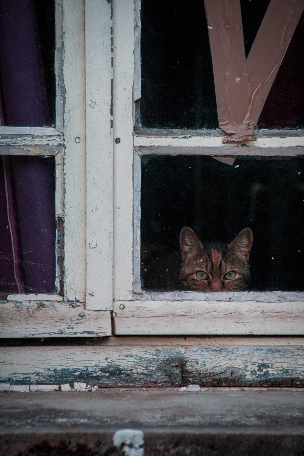 cat looking at the windowpane