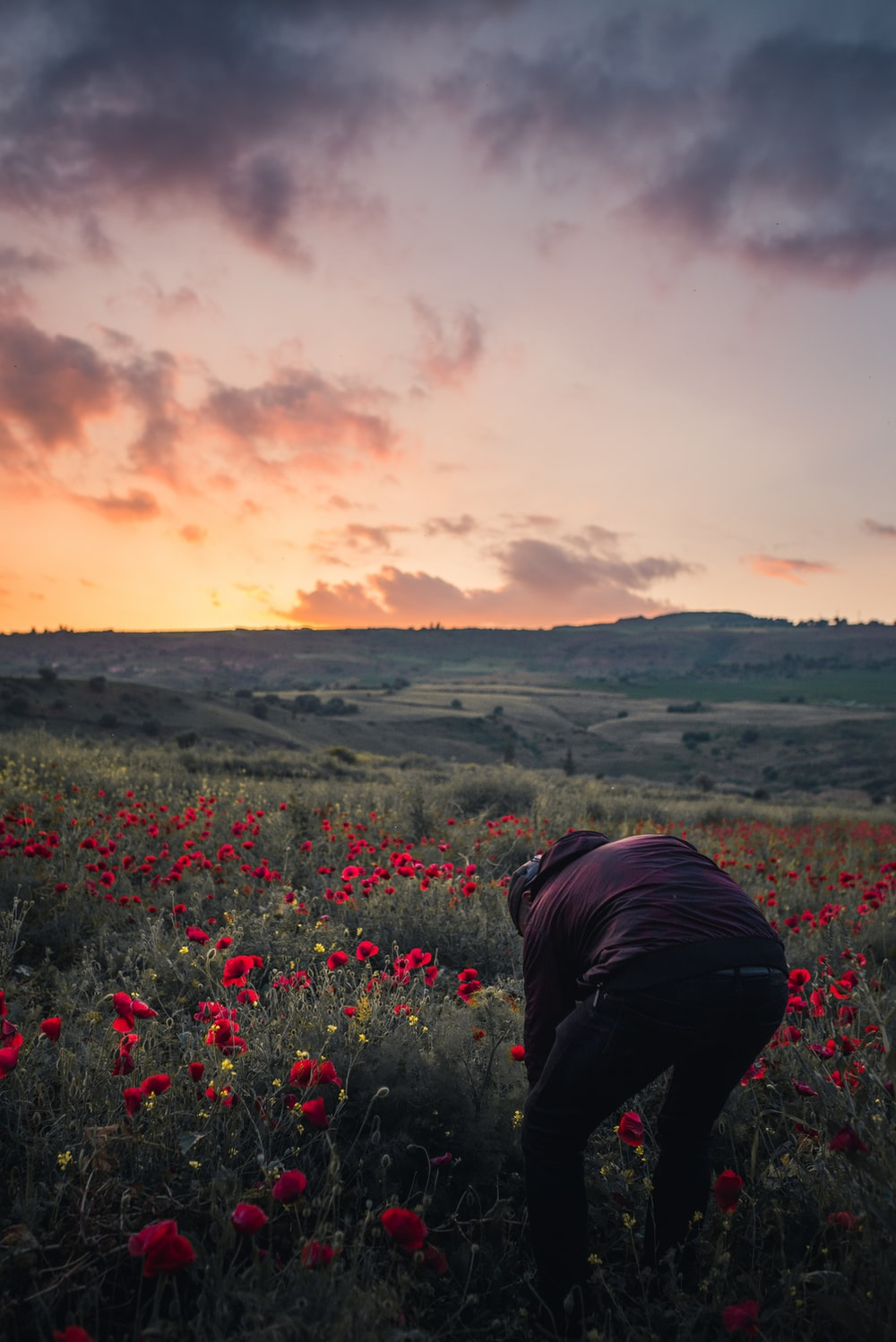person in maroon shirt on field of red poppy flowers