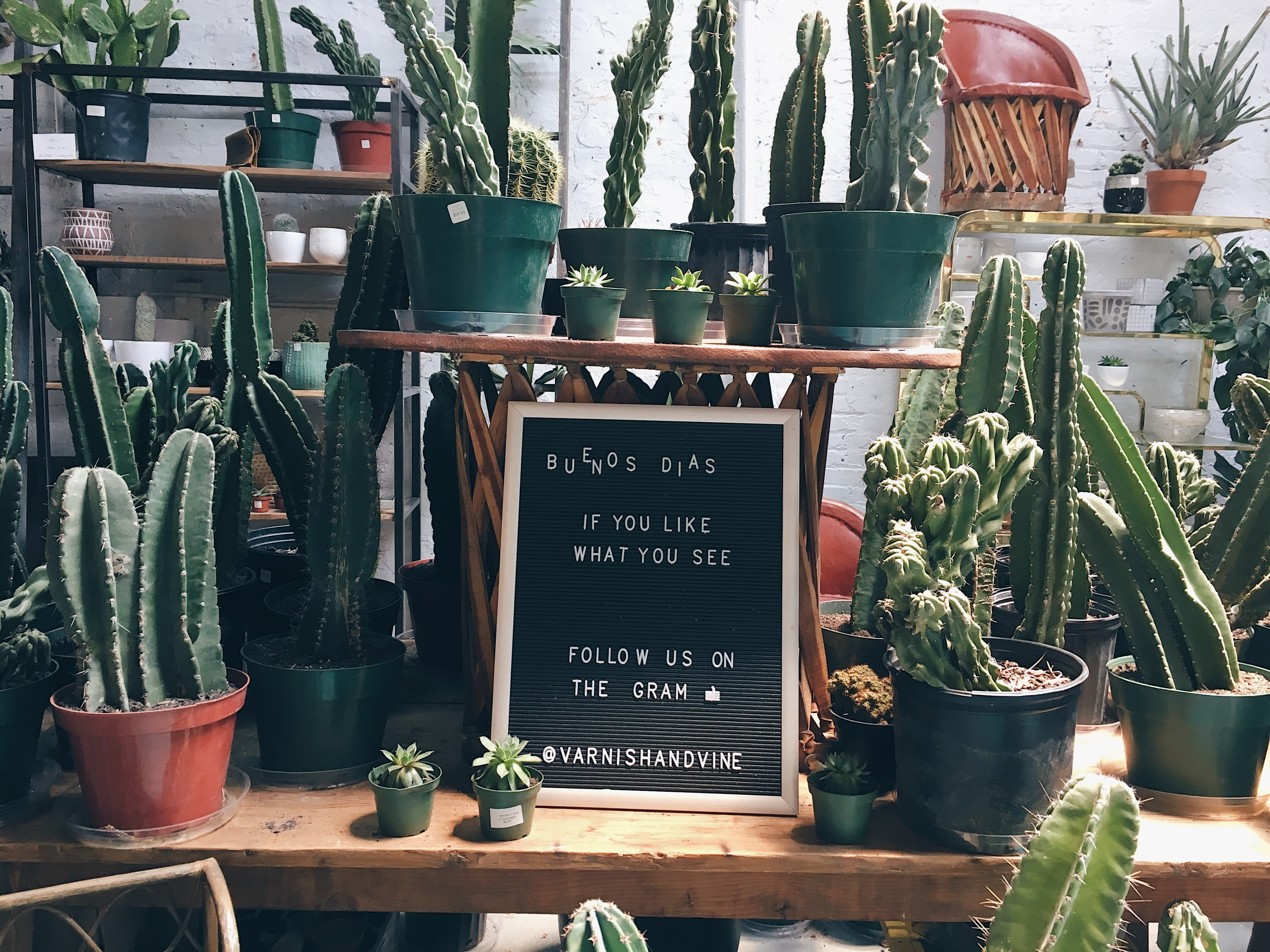 cactus plant lot on brown table