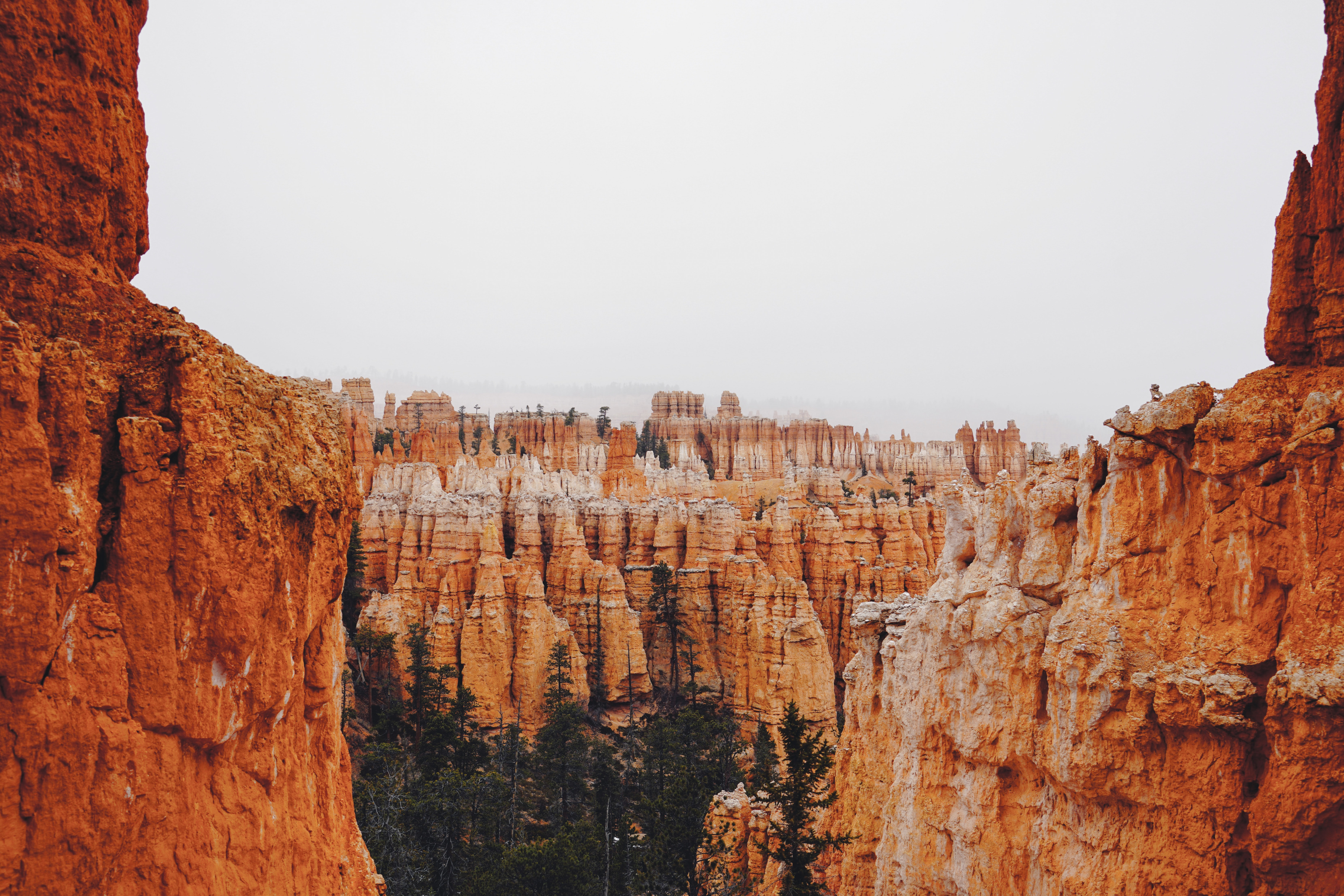 trees surrounded by rock formation
