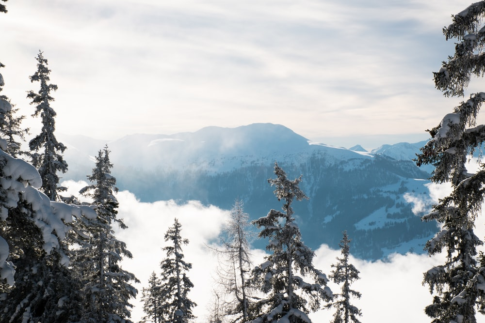 mountain and trees covered in snow