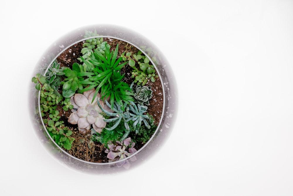 terrarium bowl