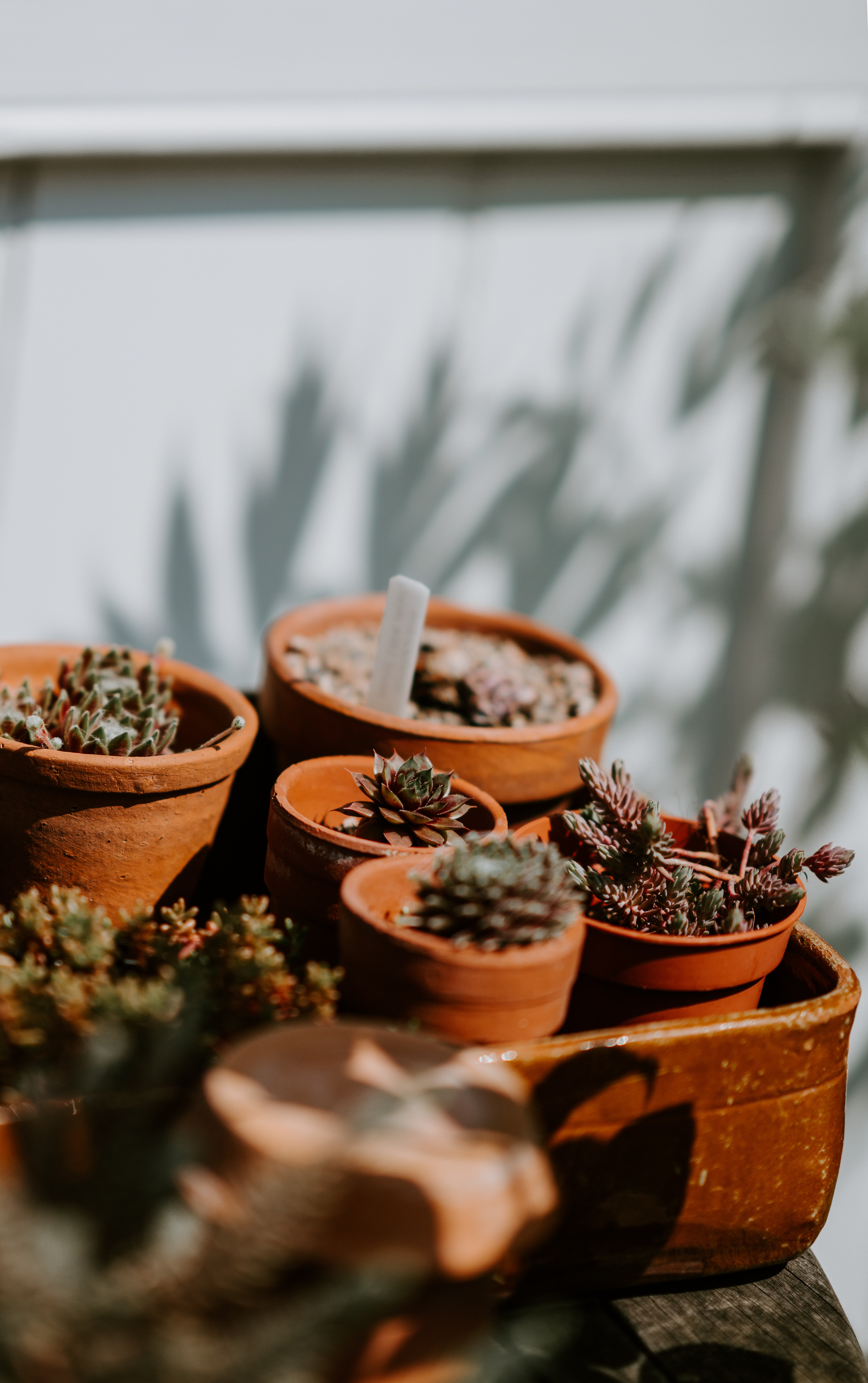 green plant in brown pots