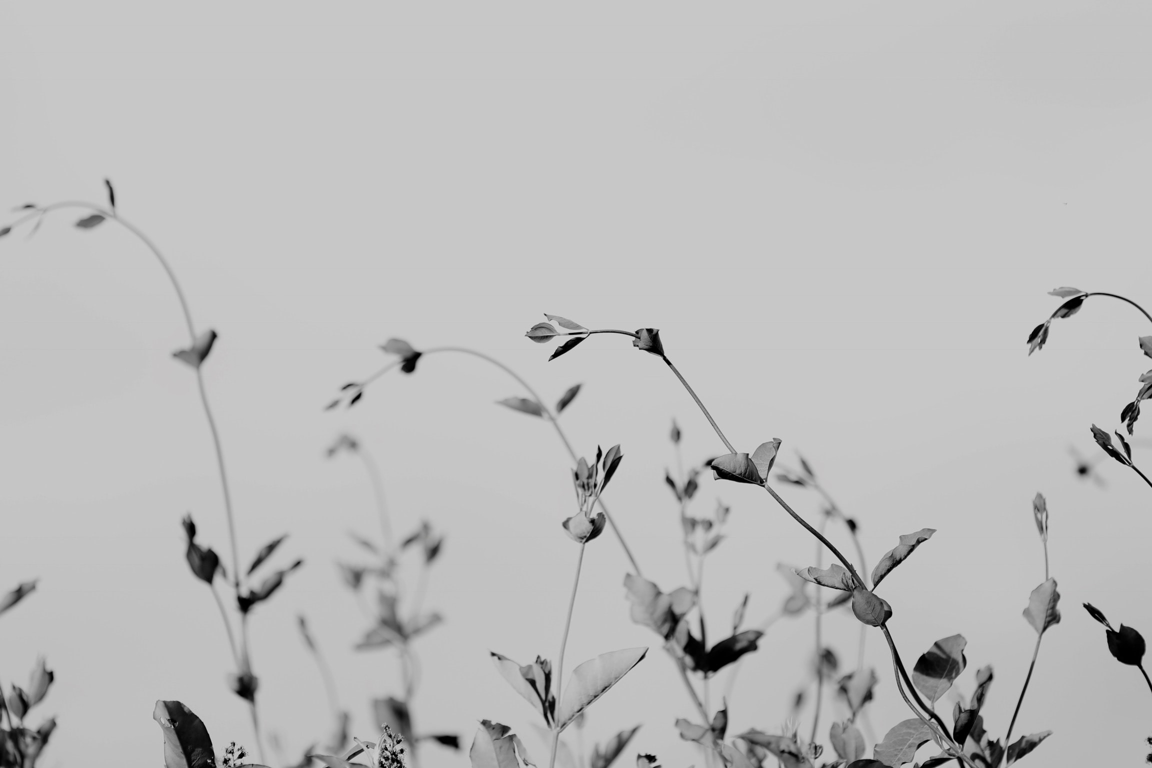grayscale photography of plants