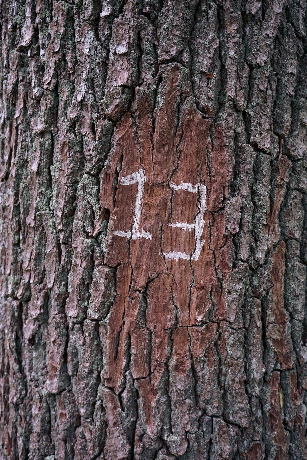 photo of tree trunk